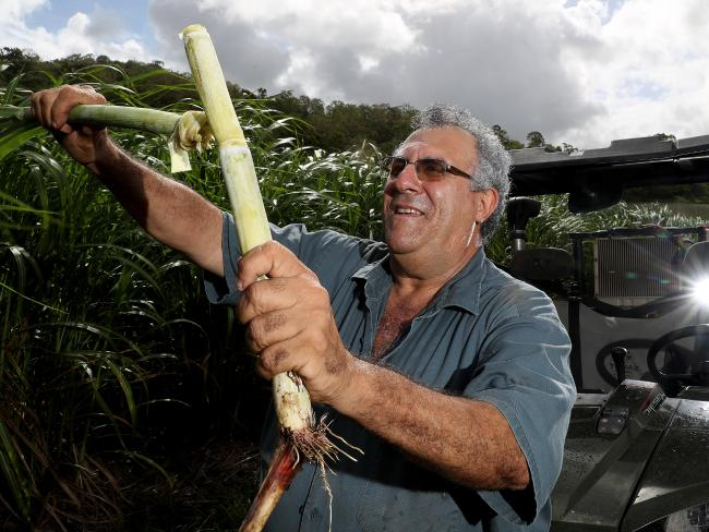 Canegrowers chairman Paul Schembri on his sugar farm north of Mackay.