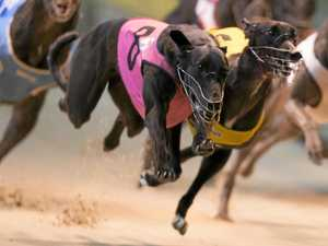 MP welcomes greyhound reforms