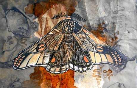 Emperor gum moth by Michele Knightley.