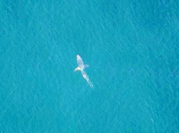 Shark sighting at Sawtell.