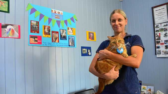 CHARITY CAT: Vet nurse Bree Miller with Megsy, whose eyes suggest she very much knows what is going on.