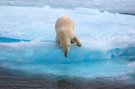 Apart from the start of direct flights from Brisbane to Canada, and the country's perceived safety, it's not hard to see why Canada is picking up more Mackay tourists, judging by this top shot of a polar bear at the McClintock Channel in Nunavut.