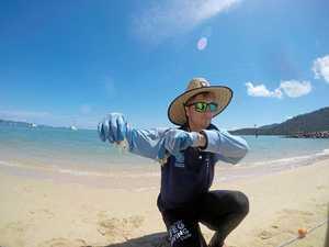 Stinger invasion closes Whitsunday beaches