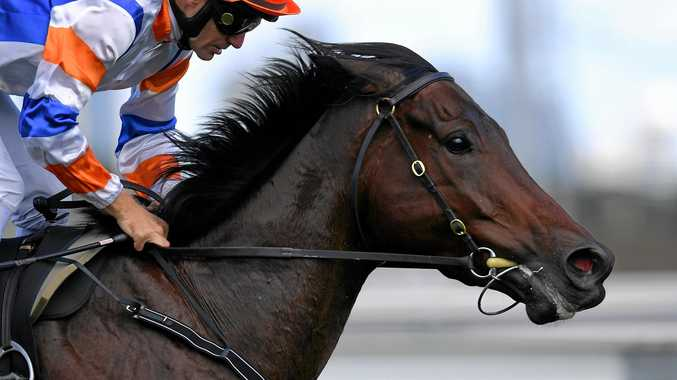 Hey Doc ridden by Luke Currie wins race 6 CS Hayes Stakeson Black Caviar, The Great Horse Raceday at Flemington Racecourse in Melbourne, Saturday. Feb. 18, 2017. (AAP Image/Tracey Nearmy) NO ARCHIVING, EDITORIAL USE ONLY