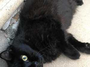 Plea after second cat killed
