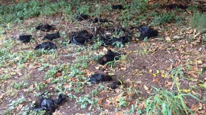 A Marburg woman picked up about 150 dead bats from her property.