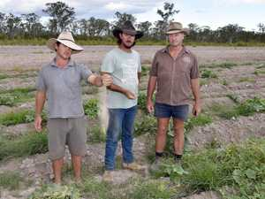 Fraser Coast Farmers face devastation