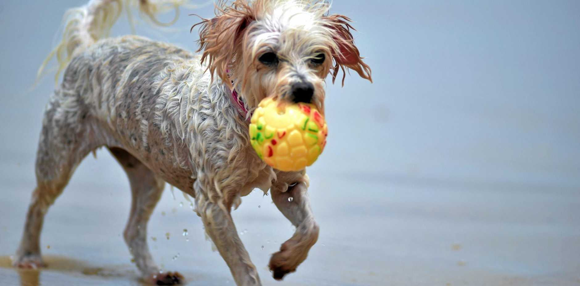 Dog owners are warned of an outbreak of Parvovirus near Grafton.