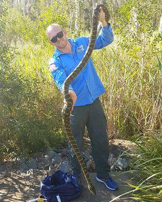 Snake Catcher Stu with the humongous Carpet Python.