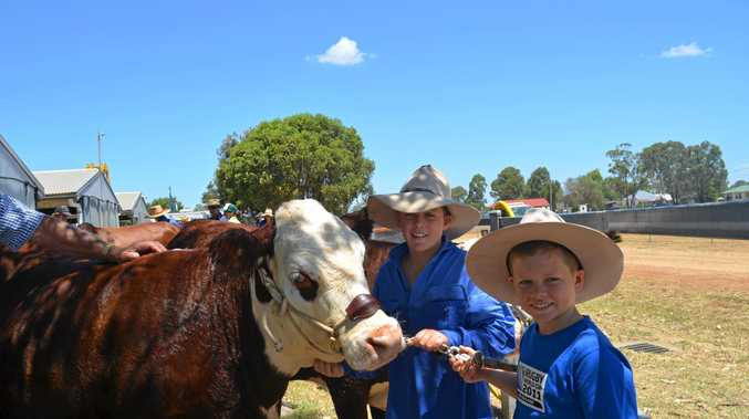 Lachlan and Riley Bacon have been busy on the local show circuit with their cattle.