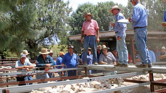 IMPROVEMENT PLAN: Southern Downs councillors have approved the upgrade of catwalks in the Warwick sheep saleyards.