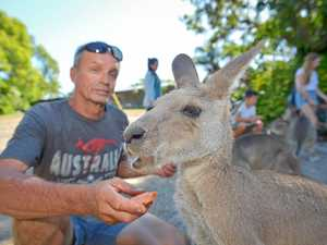 Garry from Horizons Kangaroo Sanctuary with Eastern Grey Kangaroos.