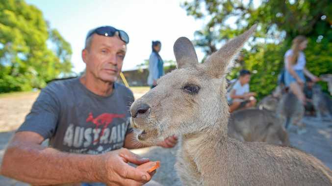 Garry from Horizons Kangaroo Sanctuary with Eastern Grey Kangaroos.