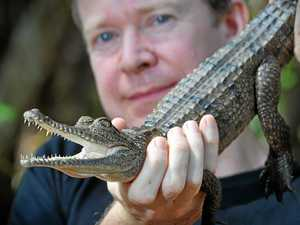 Adam Britton of crocodile research and consulting organisation Big Gecko says the reptiles are on the move.