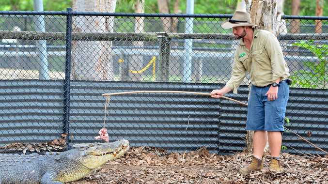 Billabong Wildlife Sanctuary curator Brad Cooper feeds Jupiter, the 4.3m crocodile.