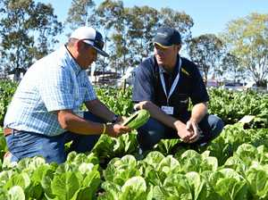 How Lockyer veggies could feed two nations