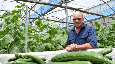 IT'S A WORRY: Cucumber grower Gianni Rosetto said there was no suspected CGMMV on his property but he was concerned about its presence in the region.