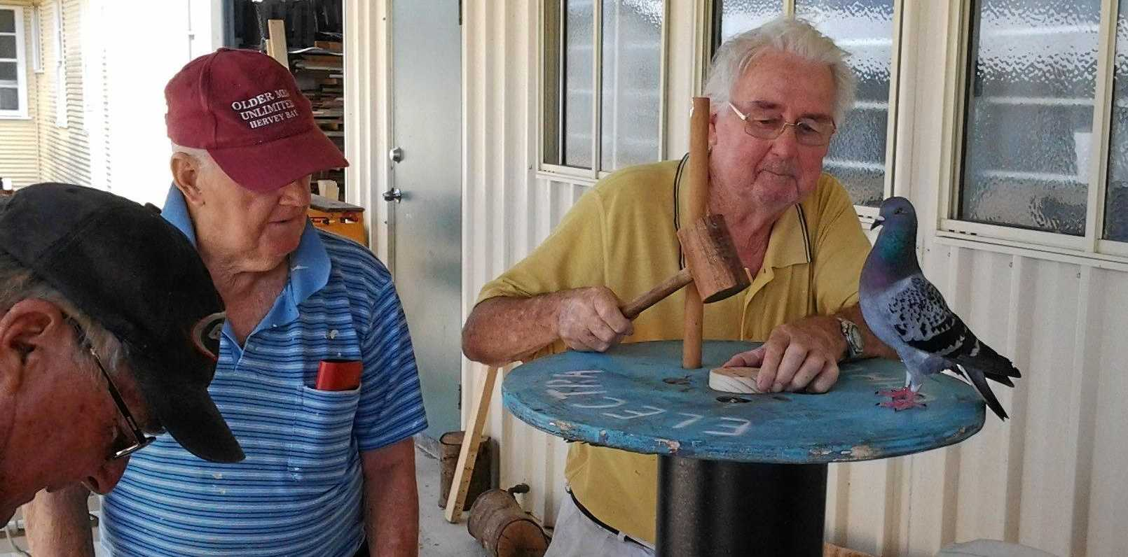 LOVE BIRD: The pigeon known for 'racing cars' in Maryborough visits the Older Men's Unlimited group at their workshop.