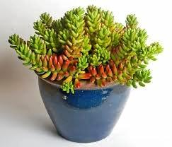 A house plant helps keep the air around you fresh.