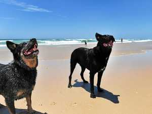 Rules are rules but surely there's room for commonsense about dogs on beaches, says Ashley Robinson.