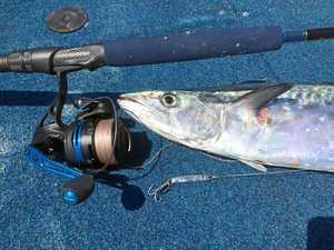The mackerel arer slowly kicking into gear.