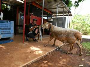 Baaad news for famous Bundy produce stall