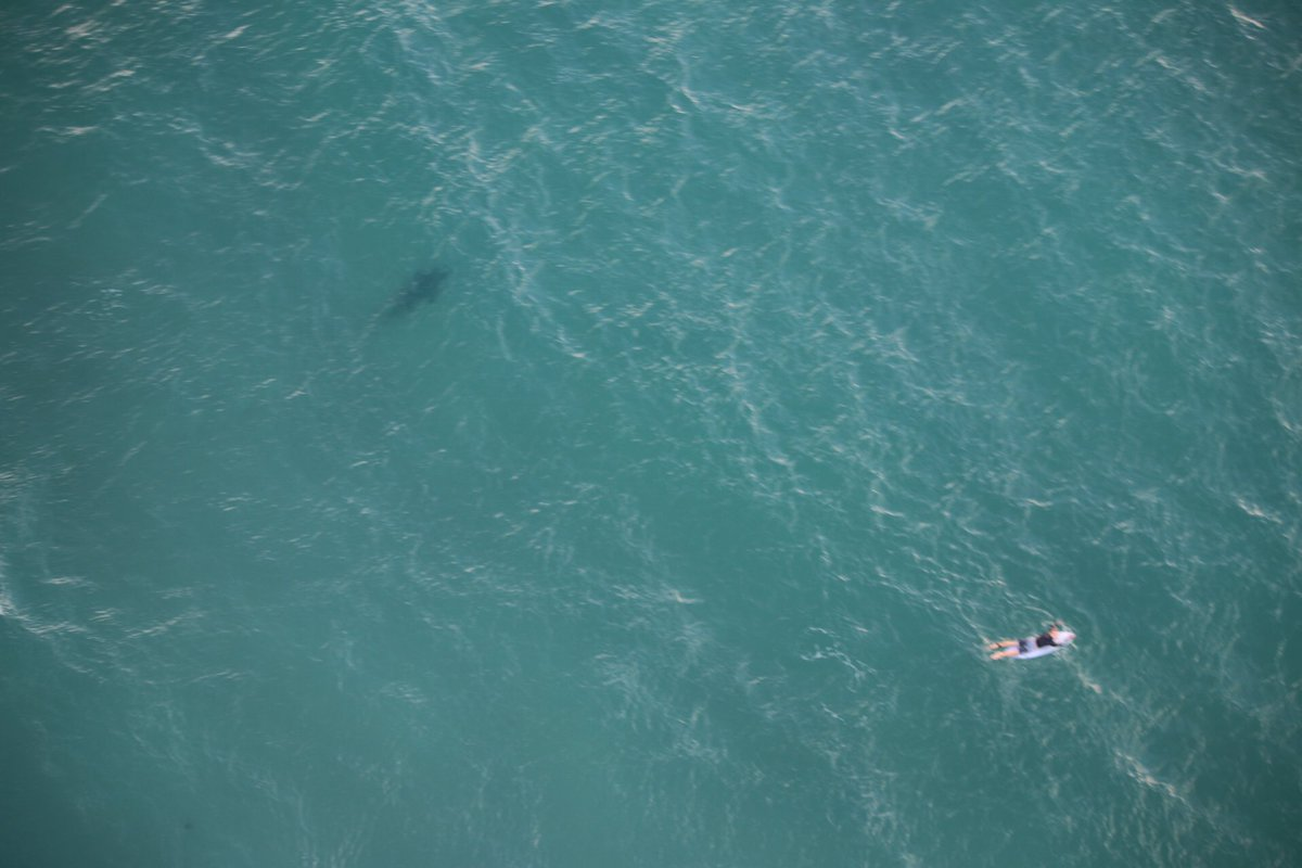 SHARK INFESTED WATERS: DPI keeping track of sharks in our rivers and beaches, including a 2.5m metre bull shark reported at Ballina on Sunday. PHOTO: @nswsharkshark