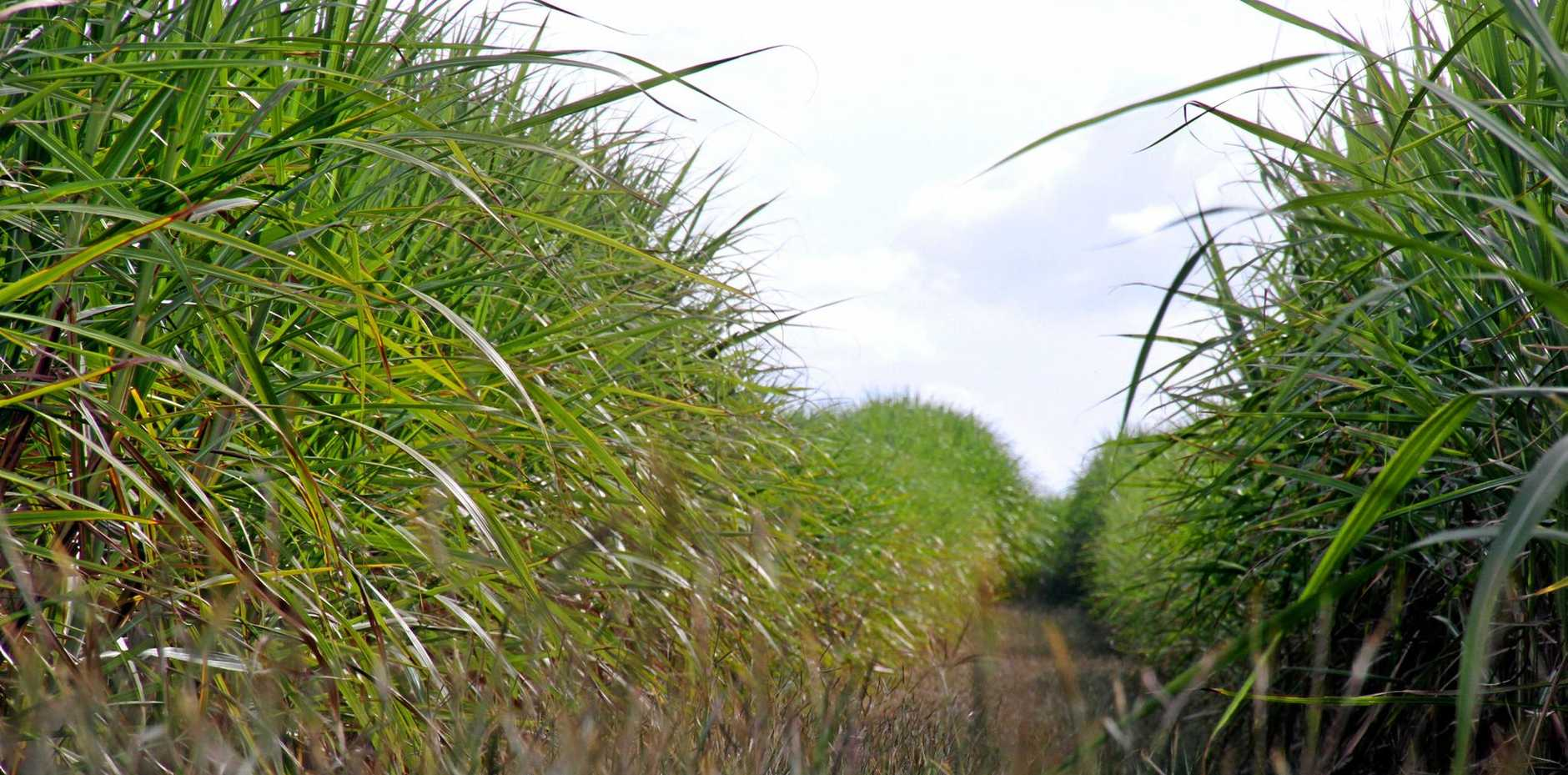 Mackay Sugar and Qube logistics can now get back to moving cane.