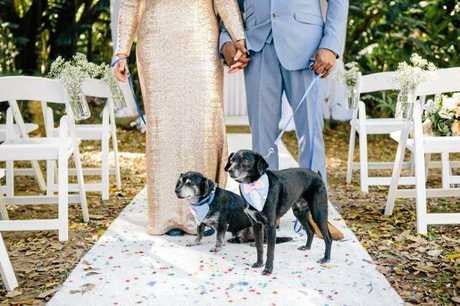 11-year-old Vuitton (front) was hit and killed by a bus last week. He's pictured with brother Louis at his owners' wedding.