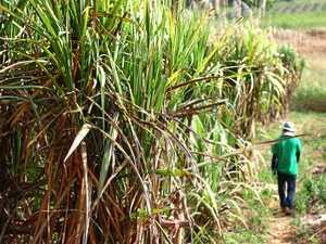 Sugar tariff cut sweet news for regional cane growers