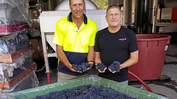 GRAPE OUTLOOK: Symphony Hill has been busy harvesting grapes for the upcoming vintage.
