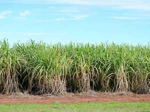 PM hatches sweet deal for our sugar growers