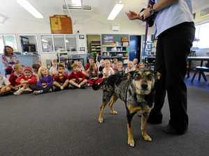 Pet ownership needs to be taken seriously