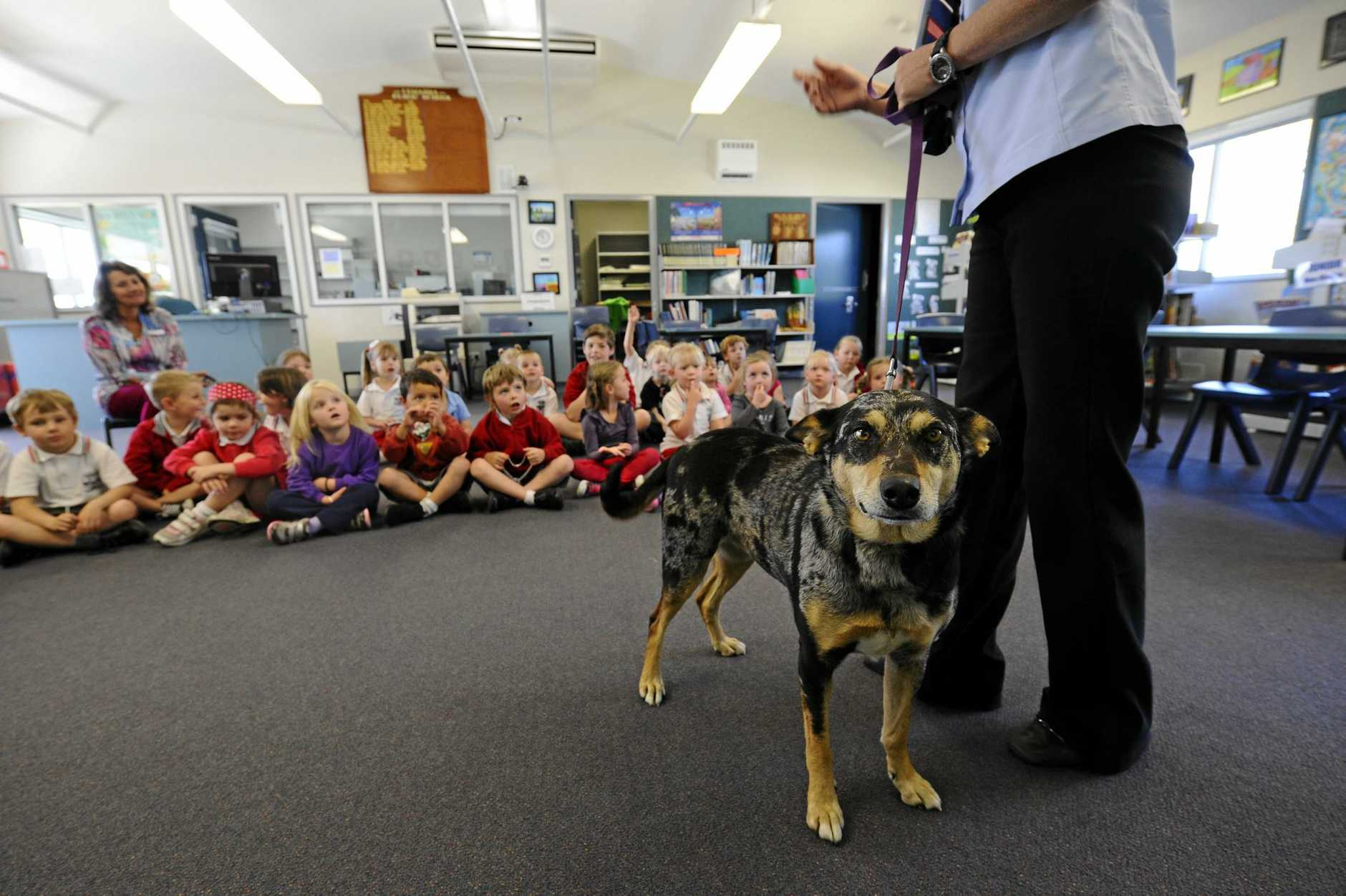 A reader is calling for the introduction of animal care into school curriculum.