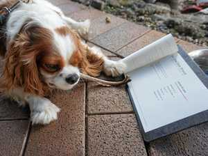 Dogs paw over a menu at canine friendly cafe