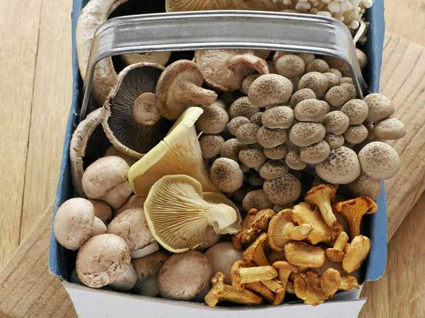 Mushrooms can be delicious but they can also kill us, so be careful which ones you eat.