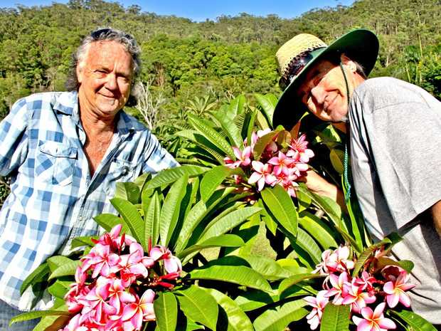Frangipani Grove's John (Tom) Lawler and Dennis Schmidt are expert breeders and can't get enough of these beautiful flowers at their amazing farm at Pimlico.