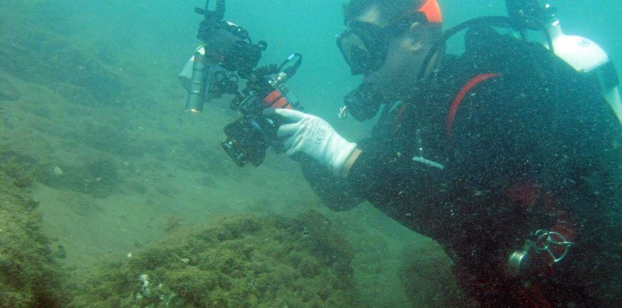 NUDIBRANCH Central divers are regulars in the Mooloolah River looking for exotic marine creatures. One thing they've never come across is a shark.