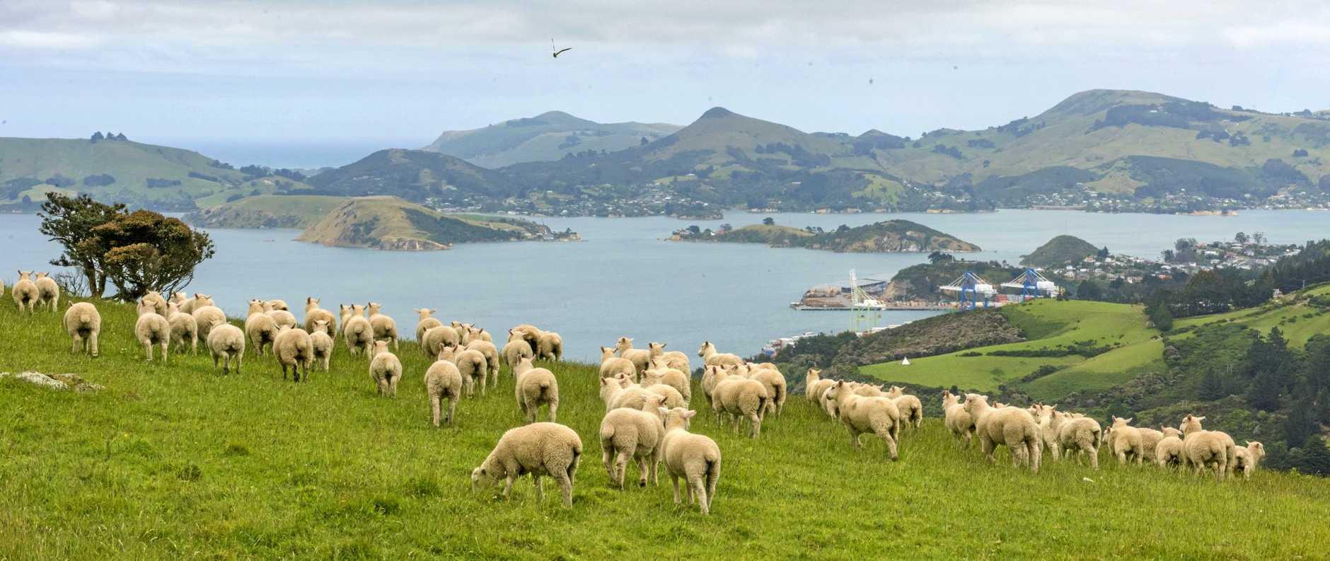 A postcard scene on the outskirts of Dunedin.