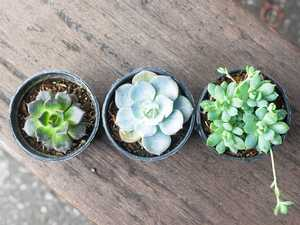 Seven indoor plants even you can't kill