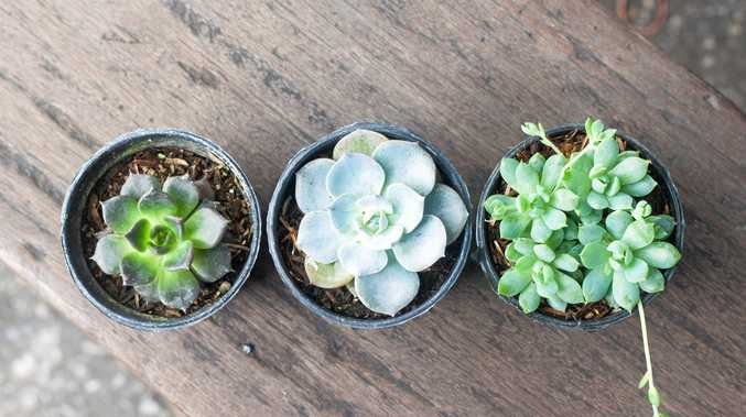 Succulents are totally on trend and super easy to look after.