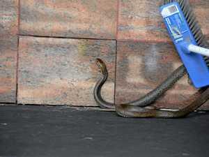 Why snakes roam Warwick CBD