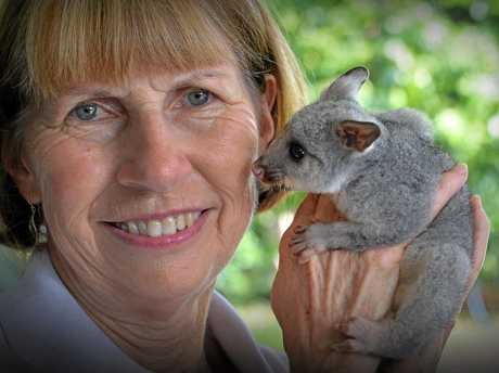 Sylvia Whiting with another brushtail possum in care.