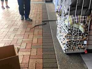 Snake in the city: reptile shocks shoppers