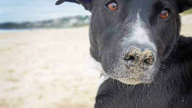 Dog Barking Council Laws