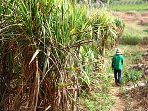 INNOVATION: Fraser Coast canegrowers to attend meeting