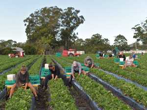 Darling Downs farmers to remain vigilant