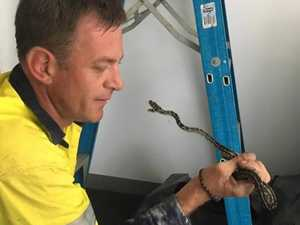 WATCH: Snake catcher's 5 favourite finds in busy season