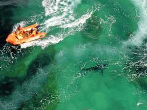 Activists, Greens point out 'failures' of shark net trail