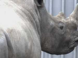 Poachers kill Rhino in Paris zoo